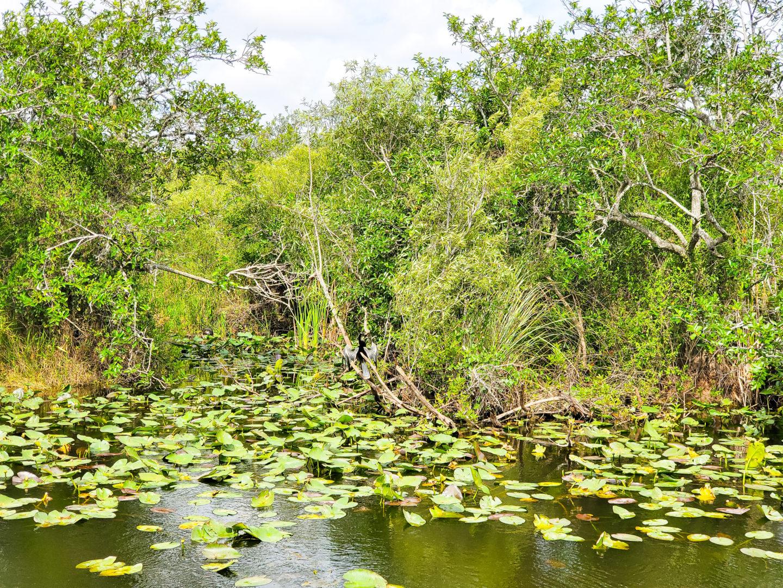 A Bird at The Everglades
