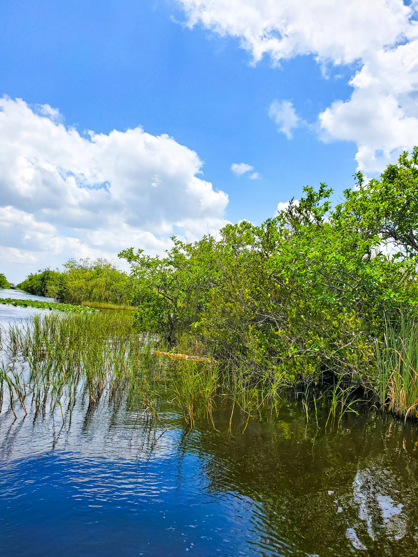 Water and green bushes in the everglades