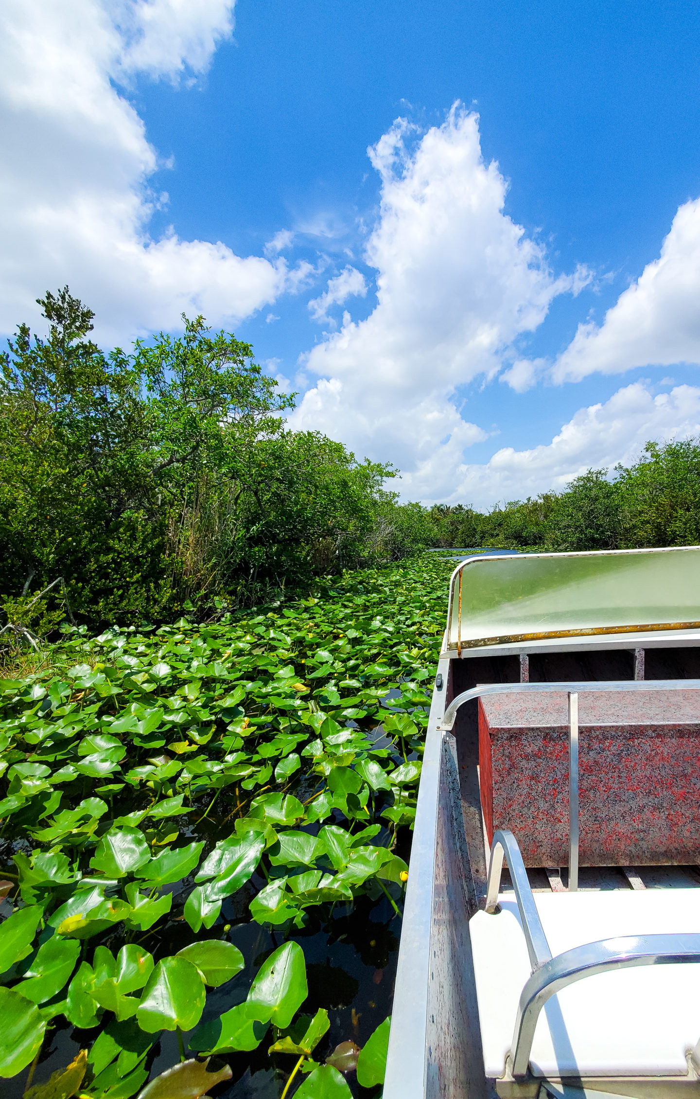 Looking for Cocodriles and Alligators at the Everglades