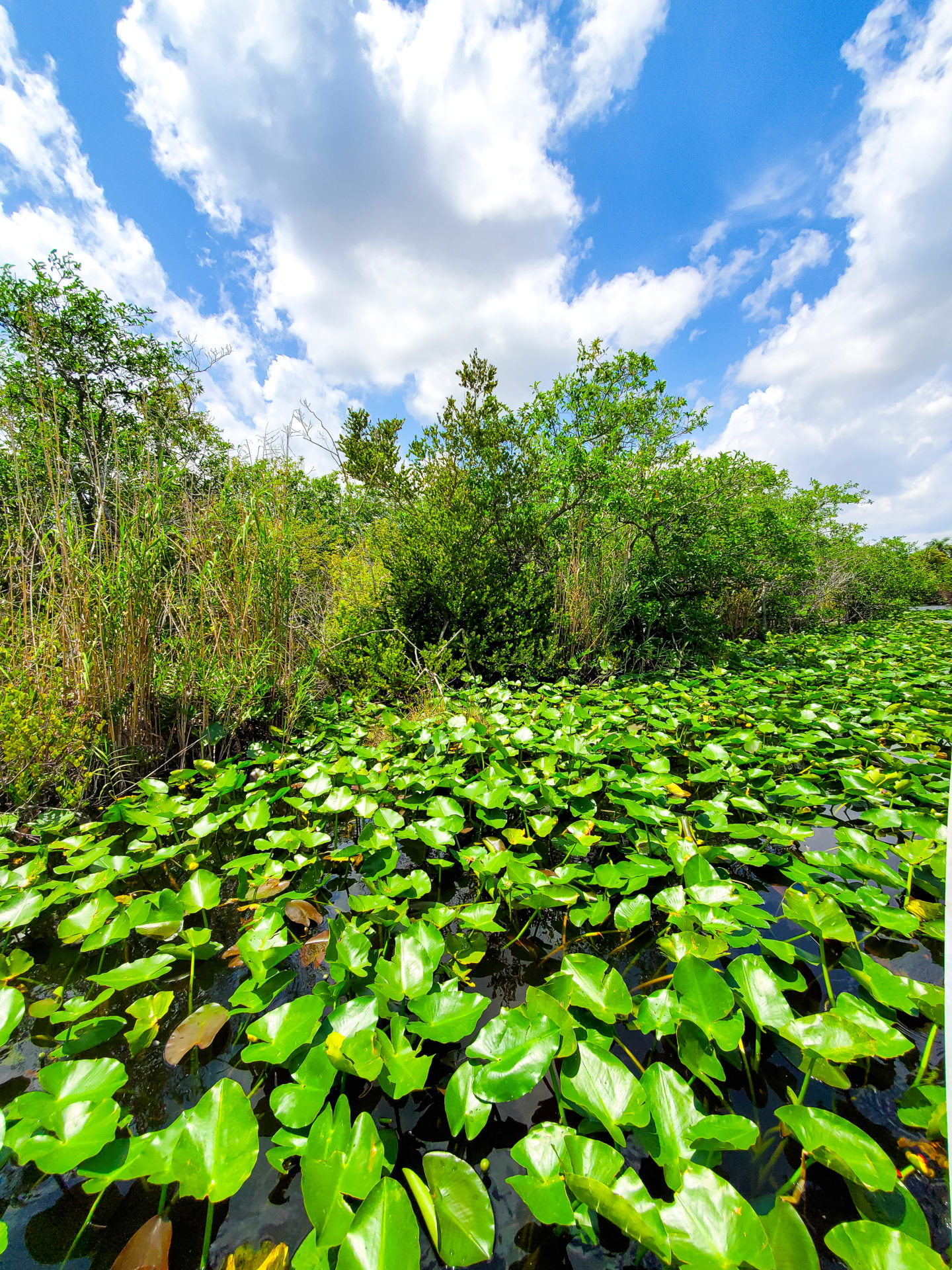 Touring the everglades in a boat