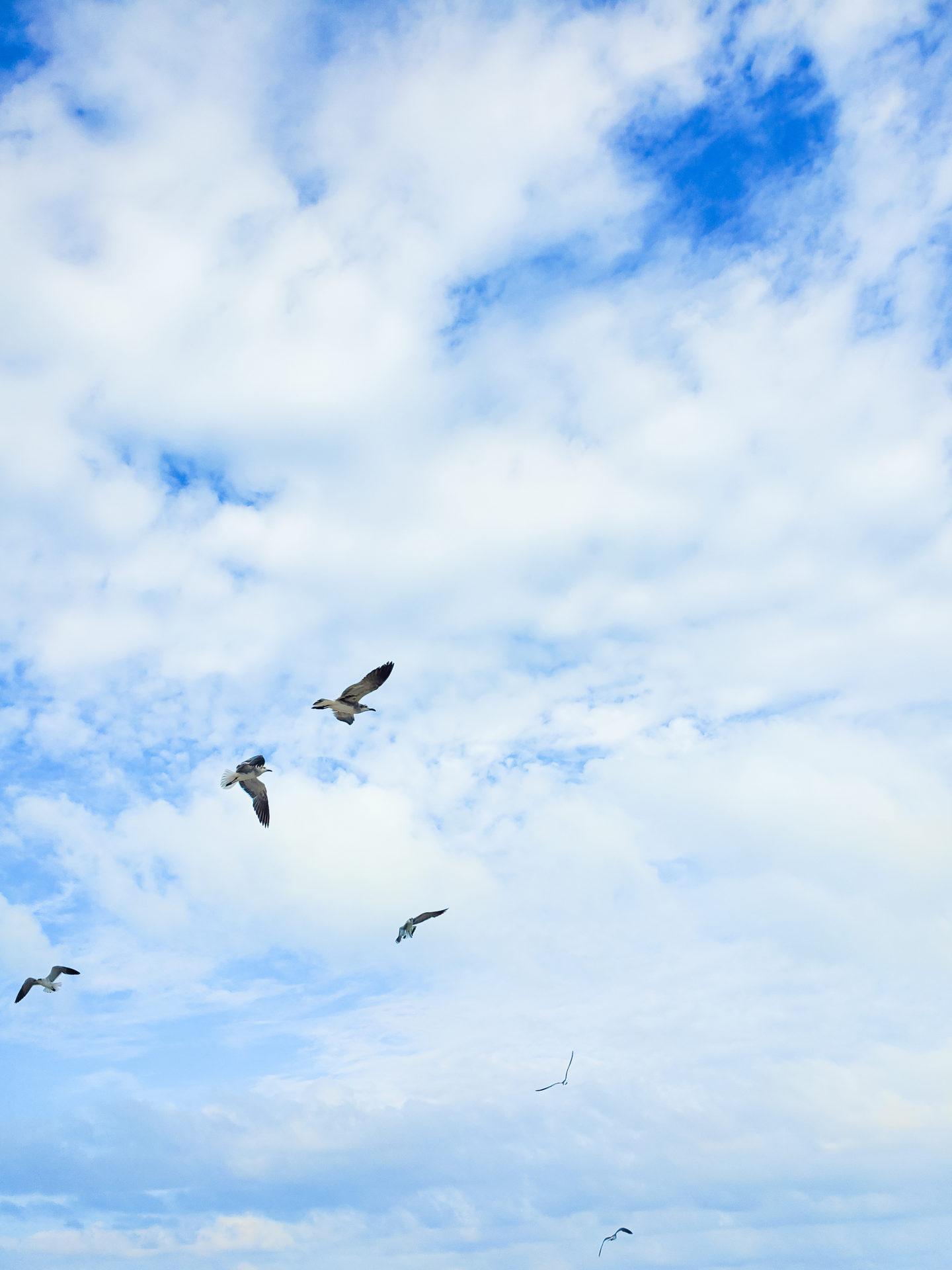 Birds Flying in a Blue Skye.