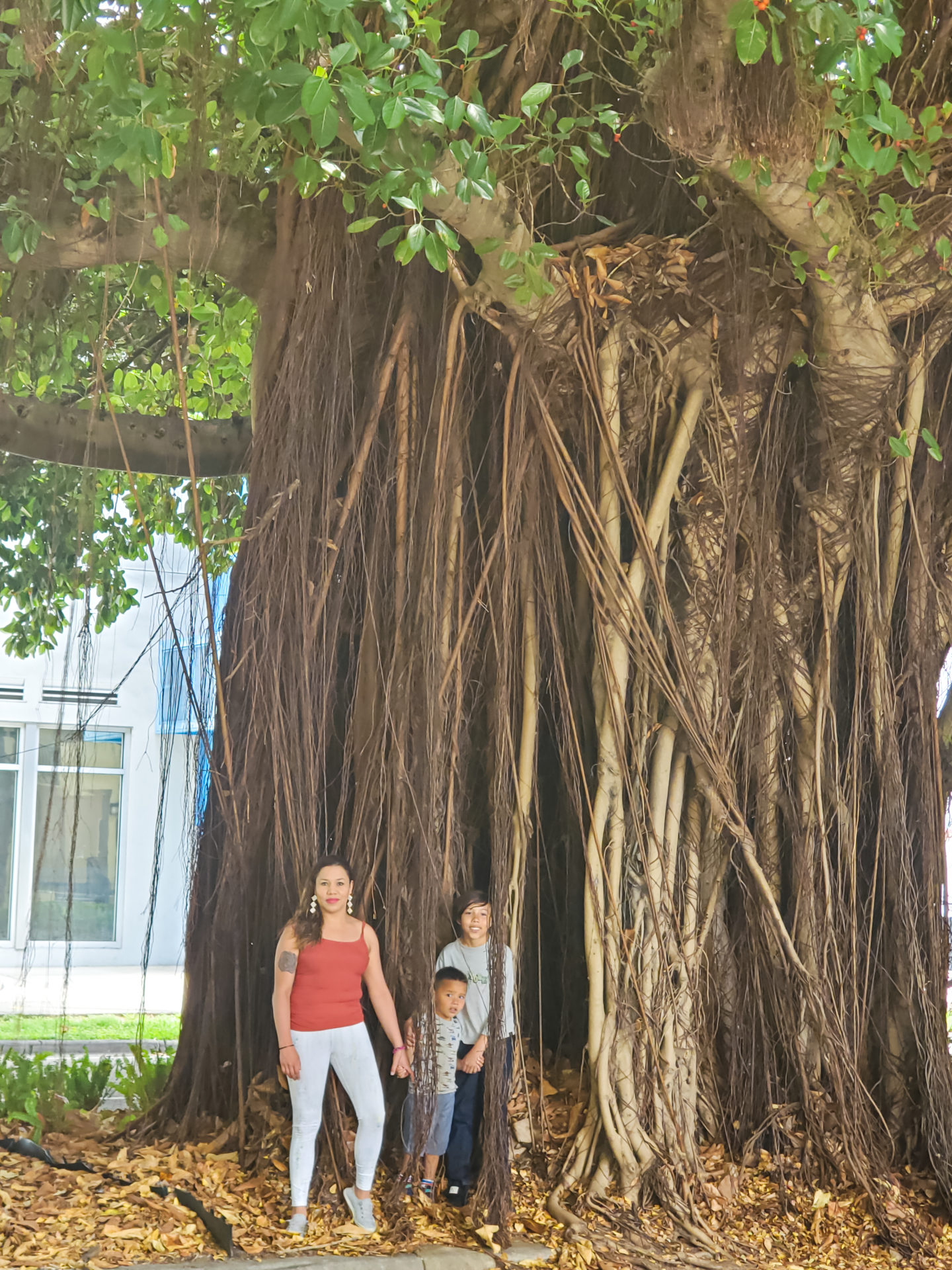 Fracia, Christopher and Liam Playing with a Giant Tree